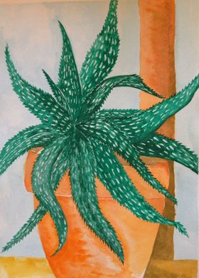 Aloe  in watercolor