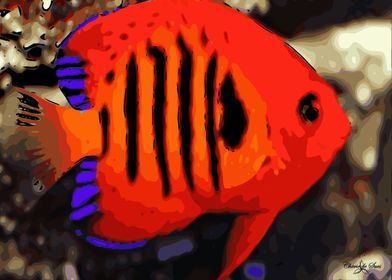 Fire Angelfish Of The Sea