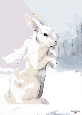 White Snow Hare