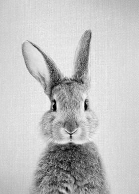 Rabbit BW