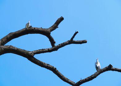 Heron tree 1