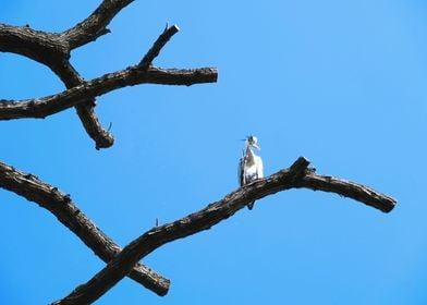 Heron tree 3