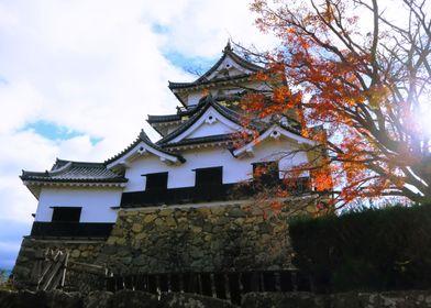 Hikone castle momiji