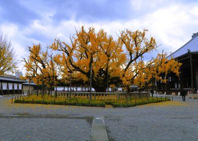 Spiritual yellow tree