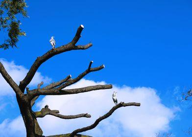 Heron tree 2