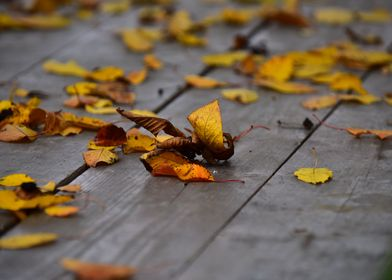 Leafs on wooden table