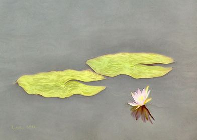 Pink Water Lily II