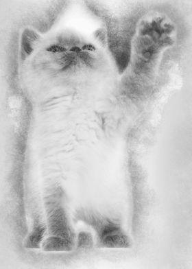 British Shorthair Kitten L Metal Poster Print Noahs Ark Displate