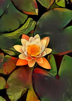 Portland Water Lily 1
