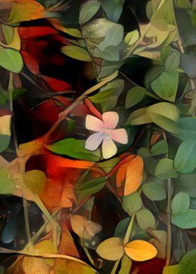 Small Flower in Portland