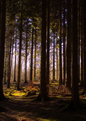 The Tranquil Forest