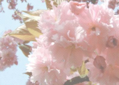 Blousy Blossom