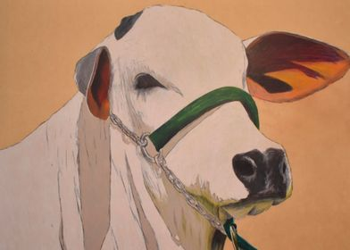 My Cow