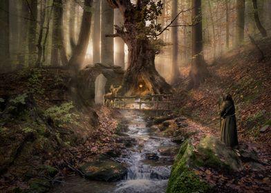 Forest Secrets 5