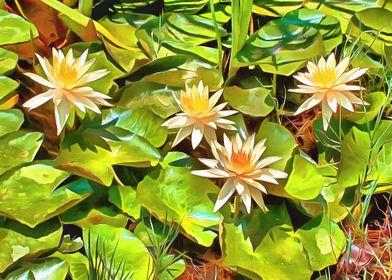 Golden Water Lilies