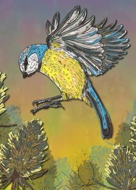 Blue Tit and Teasels