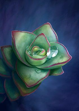 Rain over succulent