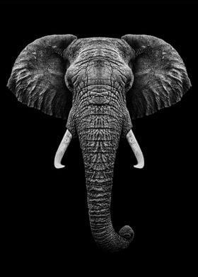 Elephant head with horns
