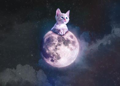 Kitten Cat on the Moon