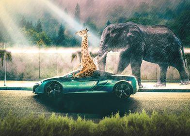 Giraffe Car Jungle
