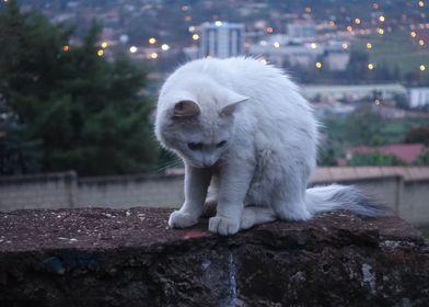 shy feline
