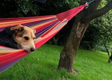My Best Friend on hammock