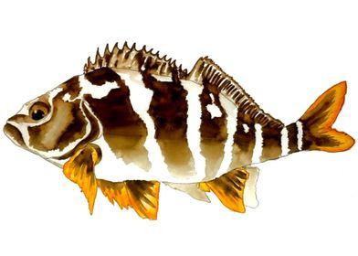 Chilean  Fish
