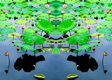 Reflection in a Lotus pond