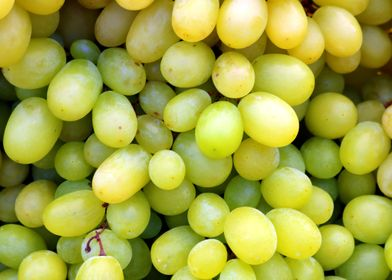 Ripe green vines