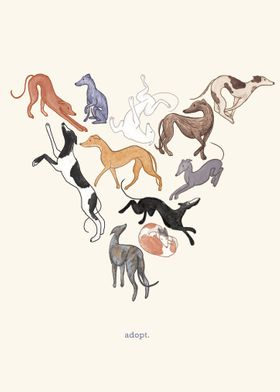 Adopt Retired Greyhounds