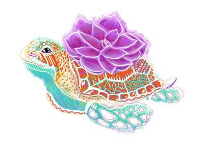 Sea Turtle Succulents