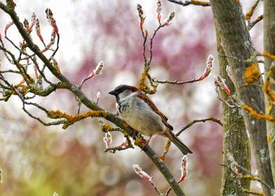 Sparrow Blossoms