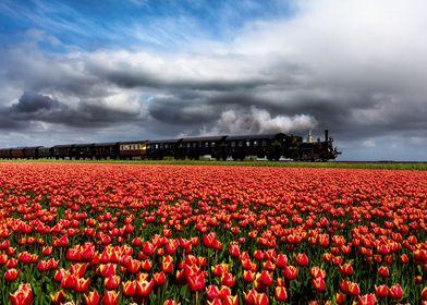 Tulip express