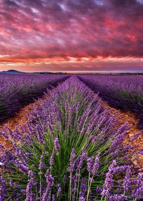 Field of heaven