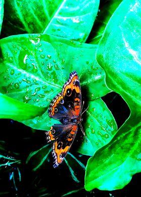 Amazing Moth