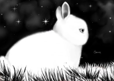 Night bunny