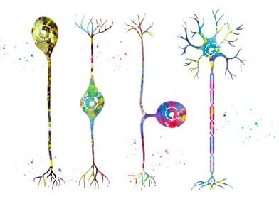 Four types of neurons