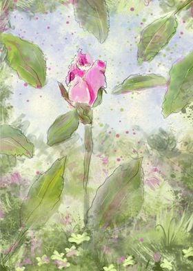 Pink Summer Rosebud