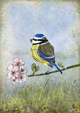 Blue Tit Bird and Blossom