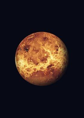 The Venus
