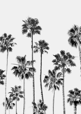 Black And White Palms 3