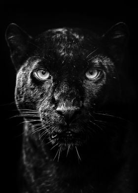Animals Wallpapers Poster Prints By Mk5 Studio Displate