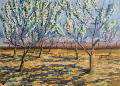 blossom of apple trees