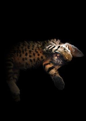 Kitten Theo