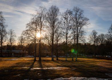 The Tree Shadows