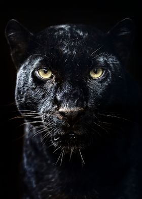 Black Panther Poster Metal Poster Mk5 Studio Displate
