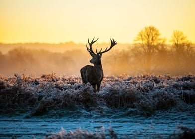 Stag in the Mist