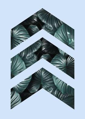 Natural polygon IV