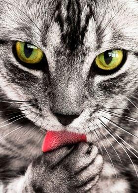 cute cat green eyes poster