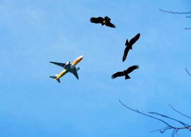 Eagles plane